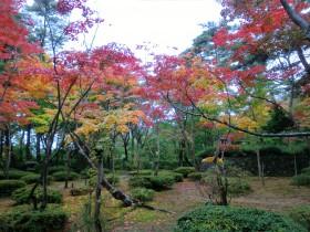 松雲山荘の紅葉紅葉11月1日